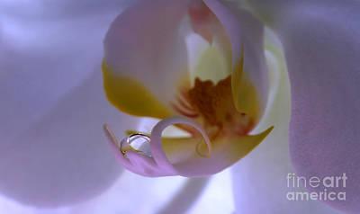 Orchid Treasure Art Print