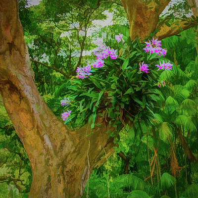 Photograph - Orchid Tree by Gary Eyring