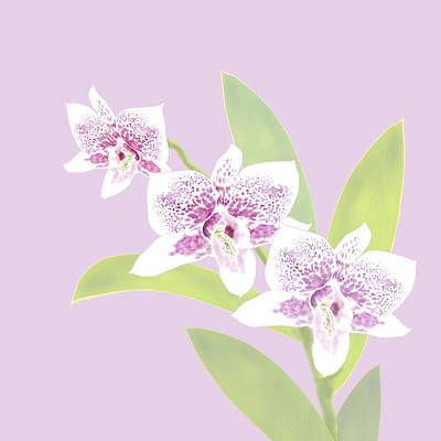 Digital Art - Orchid Trio - Lavender by Karen Dyson