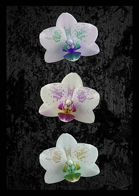 Orchid Trio Art Print by Hazy Apple