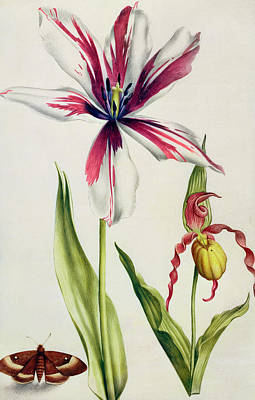 Butterfly Painting - Orchid, Tulip And Butterfly by Nicolas Robert