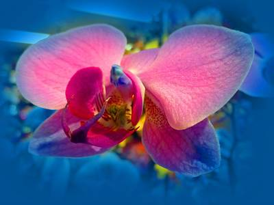 Digital Art - Orchid by Vilma Zurc