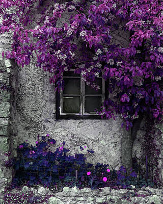 Orchid Vines Window And Gray Stone Art Print by Brooke T Ryan