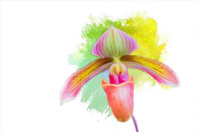 Photograph - Orchid Whimsy by Ches Black