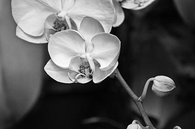 Photograph - Orchid by Wilma  Birdwell