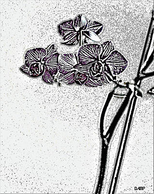Digital Art - Orchid With Color by David Pantuso