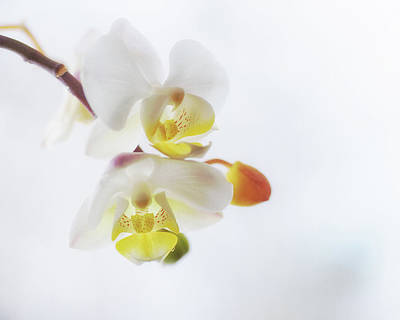 Photograph - Orchid Zen by Susan Capuano