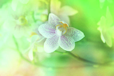 Photograph - Orchid2 by Lali Kacharava
