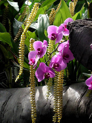 Spacious New Home Digital Art - Orchidaceous by Don  Wright