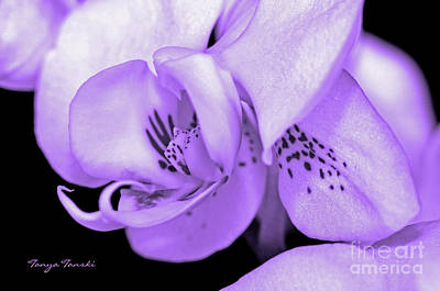 Orchid...orchid.... Art Print