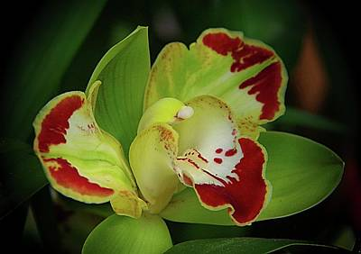 Photograph - Orchids 10 by Karen McKenzie McAdoo