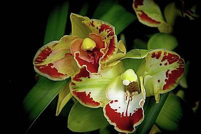 Photograph - Orchids 14 by Karen McKenzie McAdoo
