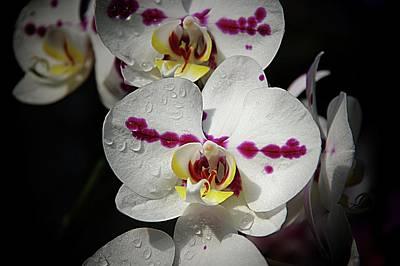 Photograph - Orchids 19 by Karen McKenzie McAdoo