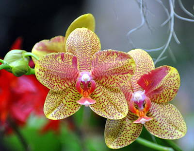 Orchids 35 Art Print by Marty Koch