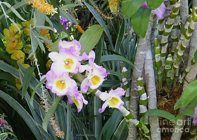Photograph - Orchids 4 by Kathie Chicoine