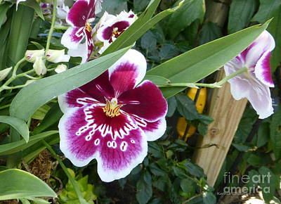 Photograph - Orchids 5 by Kathie Chicoine