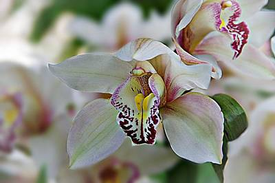 Photograph - Orchids 8 by Karen McKenzie McAdoo