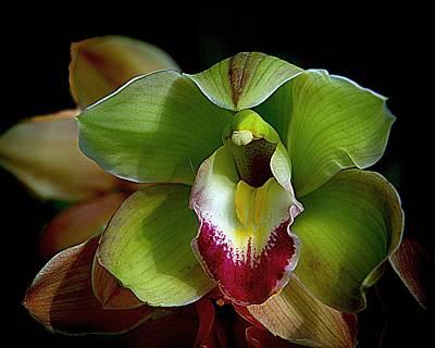 Photograph - Orchids 9 by Karen McKenzie McAdoo