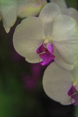 Photograph - Orchids A Study Of Patience by Patricia Dennis