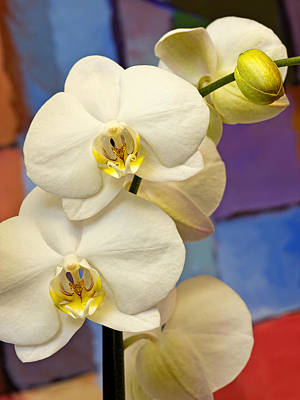 Photograph - Orchids And Art by Lutz Baar