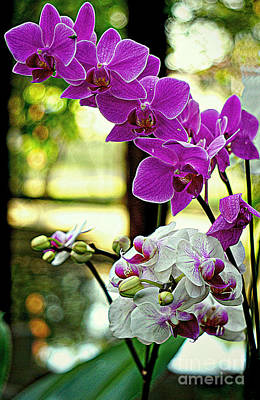 Digital Art - Orchids And Buds Of Thailand by Ian Gledhill