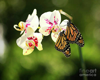 Photograph - Orchids And Butterflies Photo by Luana K Perez