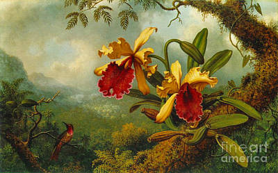 Photograph - Orchids And Hummingbird 1875 by Padre Art