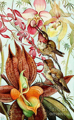 Photograph - Orchids And Hummingbirds 1917 by Padre Art