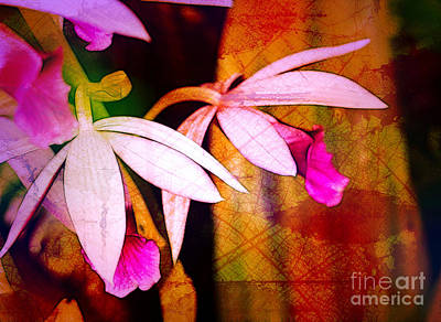 Photograph - Orchids And Textures by Judi Bagwell