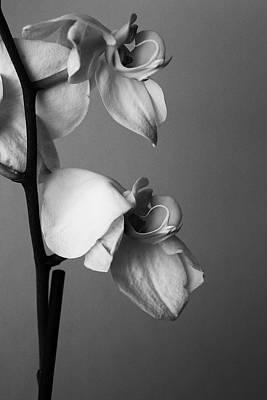 Photograph - Orchids - April 2009 by Desmond Manny
