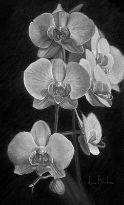 Scale Pastel - Orchids - Black And White by Lucie Bilodeau