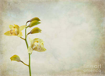 Photograph - Orchids by Cindy Garber Iverson