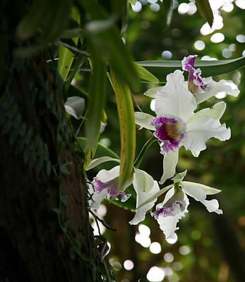 Orchids Art Print by Deborah Molitoris