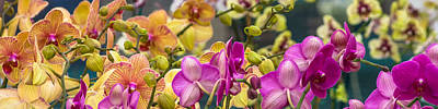 Photograph - Orchids by Ed Gleichman