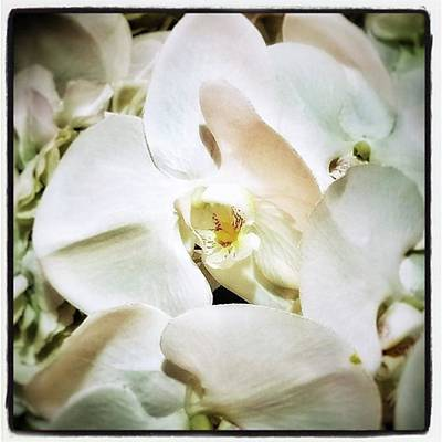 Photograph - Orchids For His Majesty. In Loving by Mr Photojimsf