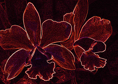 Digital Art - Orchids - For Pele by Kerri Ligatich