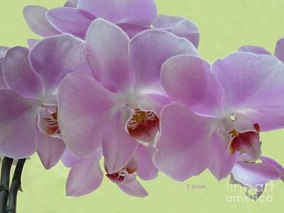Photograph - Orchids by Frances  Dillon