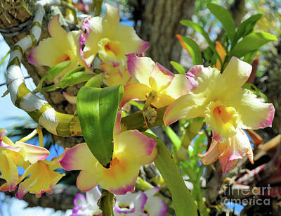 Photograph - Orchids Hanging From Trees by Elaine Manley