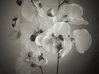 Photograph - Orchids by Hugh Smith
