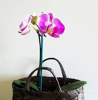 Orchids In A Basket Original