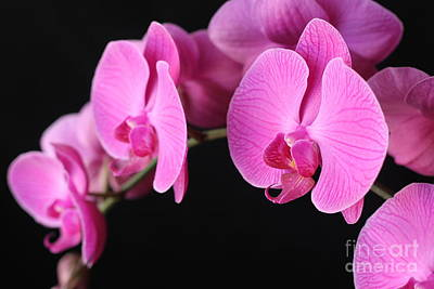 Orchids In Bloom Art Print by Angie Bechanan
