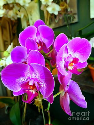 Photograph - Orchids In Bloom by Ed Weidman