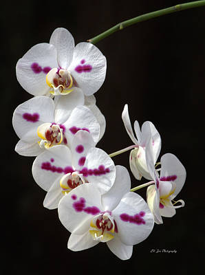Photograph - Orchids In Bloom by Jeanette C Landstrom