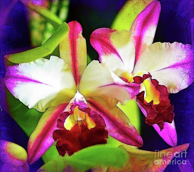 Photograph - Orchids In Color by Judi Bagwell