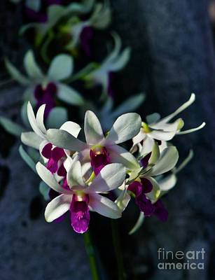 Photograph - Orchids In Depth by Craig Wood