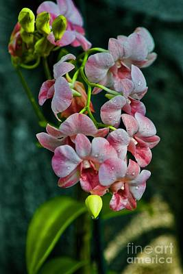 Photograph - Orchids In Full Bloom by Craig Wood