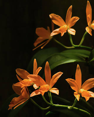 Photograph - Orchids In Orange by Stephanie Maatta Smith