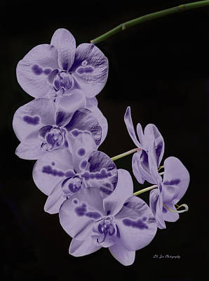 Photograph - Orchids In Orchestra by Jeanette C Landstrom