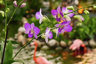 Photograph - Orchids In Paradise by Nicole Lloyd