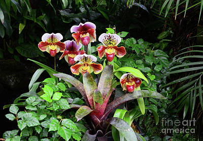 Photograph - Orchids In The Garden by Cindy Manero